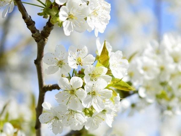 Unser Frühlingsangebot für Sie!