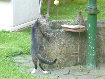 Unsere Katze Lio