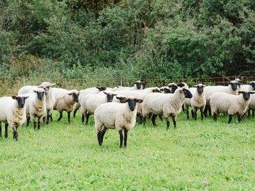 Landleben in und um Waischenfeld