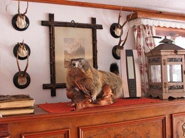 """...und täglich grüßt """"Simon"""" das Murmeltier in der Wohnstube der Murmeleshütte"""