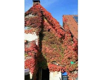 Herbstschmuck an unserem Haus