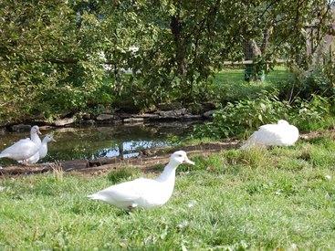 Unsere Enten an ihrem Lieblingsplatz