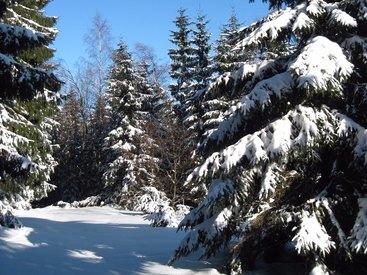Winter rund um den Schlossberghof