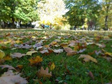 Bad Steben Ferienwohnung Heger Goldener Herbst im Kurpark