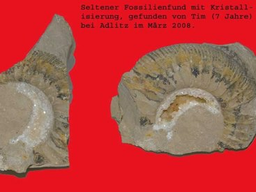 Seltener Fosilienfund am Adlitzer Berg