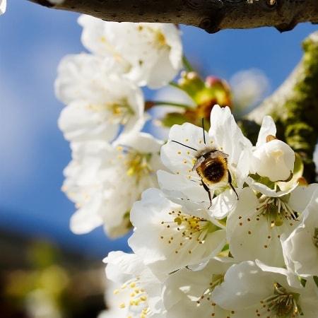 Kommen Sie zur Kirschblüte in die Fränkische Schweiz und nutzen Sie unsere Frühlingspauschale