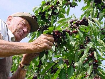 Handverlesene Früchte