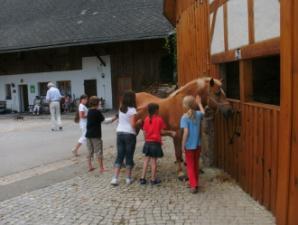 Pferde putzen