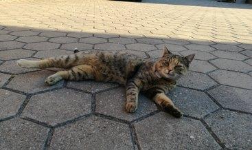 Unsere Katze Minka
