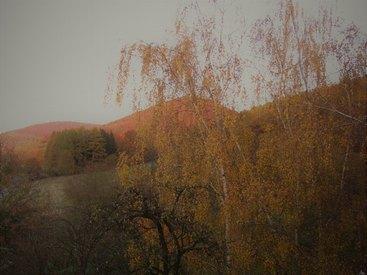 Ausblick vom Doppelzimmer in das Birkenreuther Tal