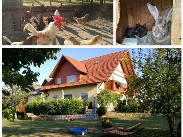 Zusammen mit unseren Tieren den Sommer in unserer traumhaften Ferienwohnung verbringen.