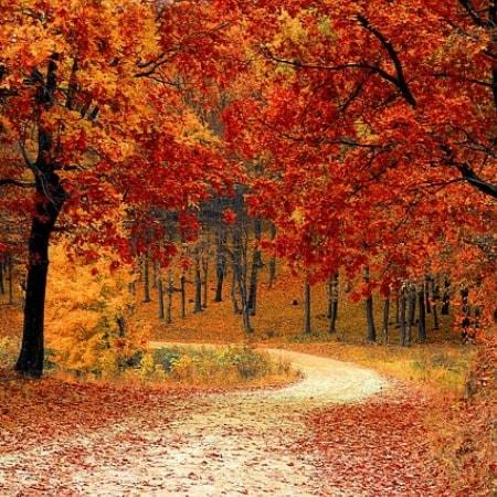 Unser Herbstangebot für Sie!