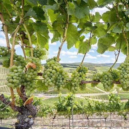 16. Mai 2020 - Unser fränkisches Spargel-Weinfest
