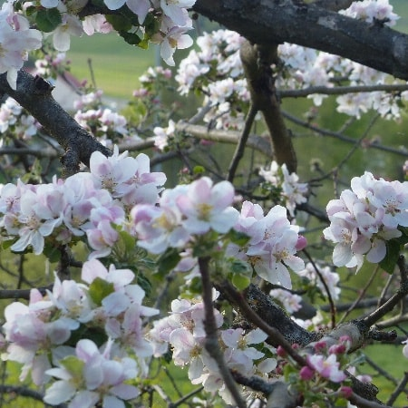 Frühlingserwachen im Ahorntal erleben in ruhiger Ortsrandlage. Tolle Wanderwege ab Haus.
